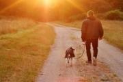 هل تربية الكلاب من ثقافتنا؟
