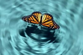 """مصطلح """"تأثير الفراشة"""" ودوره في تغيير مسار الحياة"""